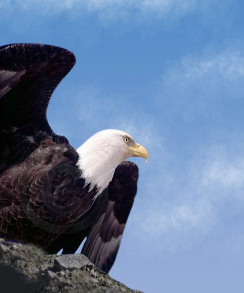 eagle-contact-image
