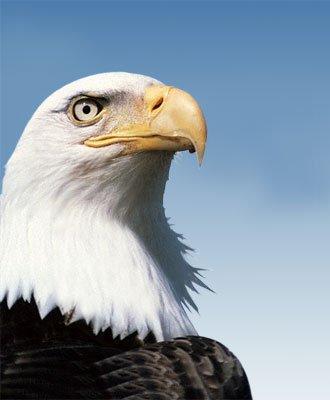 eagle-vision-image